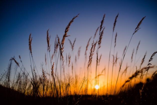 植物のクローズアップと夕日を背景