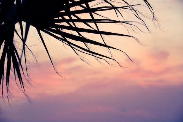 日没のパームツリー