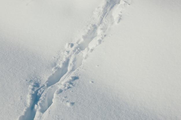 深い雪の中の動物の足跡