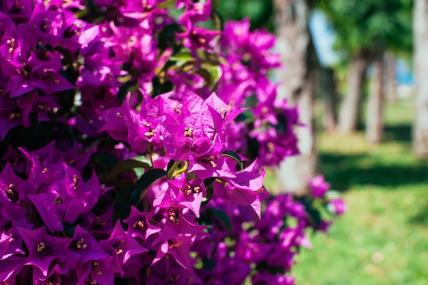 日当たりの良い夏の日に公園に咲くピンクの花