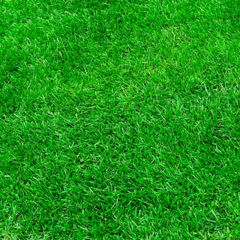 Поверхность зеленой травы