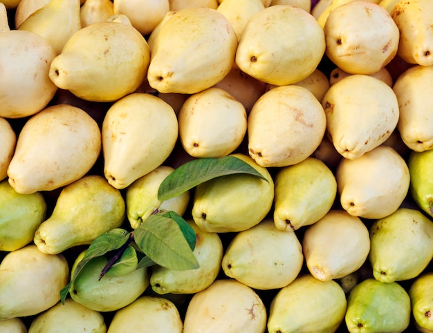黄色のグアバを収穫します。健康的な食事。秋の農業収穫の概念
