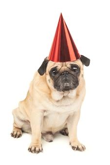 Мопс с праздничной шляпой