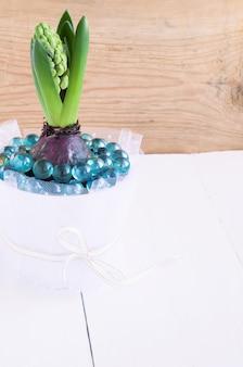 白い鍋にヒヤシンスの花のつぼみ