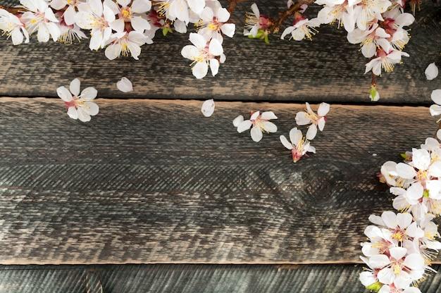 太陽光線を持つ古い木製の背景の開花枝。春の花。