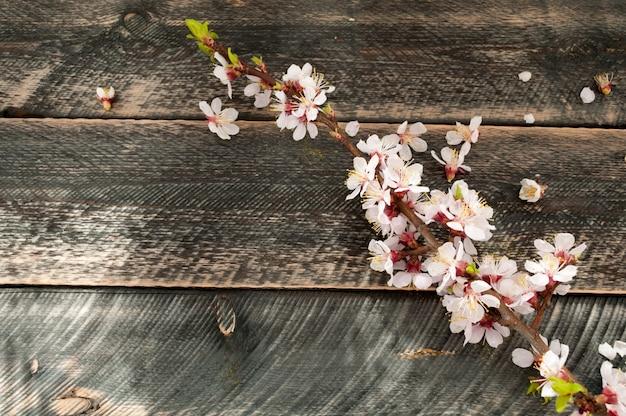 古い木製の背景に開花枝。春の花。