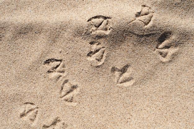 Следы чайки через песок на пляже. отпечатки стоп птиц на песке