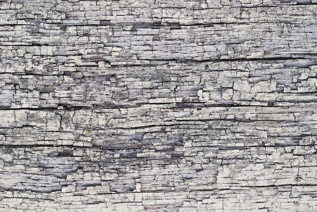 樹皮の質感、灰色の乾燥した硬材をクローズアップ
