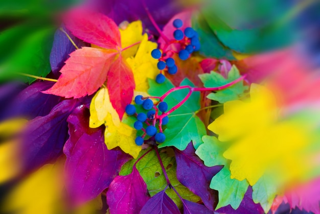 Мягкий фокус, размытый, осень из разноцветных листьев, яркая осень