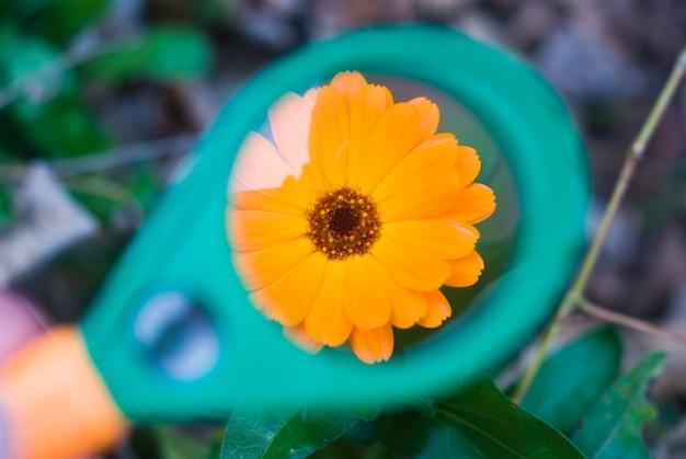 Фото красивый оранжевый цветок через увеличительное стекло