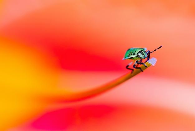 ソフトフォーカス、マクロ写真、花のクローズアップで小さな昆虫の写真と明るい、カラフルな背景