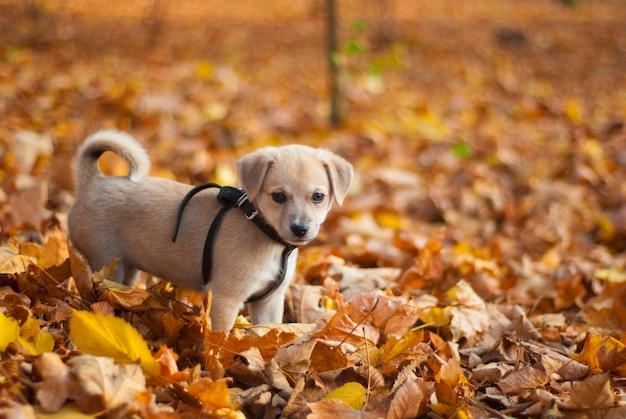秋の公園で子犬