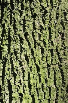 樹皮の質感、クローズアップ