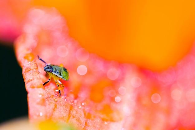 ソフトフォーカス、マクロ写真、花のクローズアップで小さな昆虫の写真で明るい