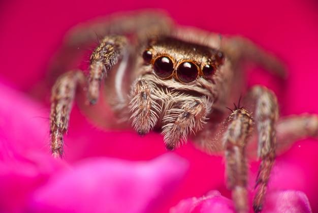 Прыгающий паук на яркой природе