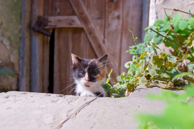 放棄された庭の子猫