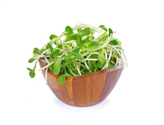 白で隔離される緑の若いヒマワリの芽