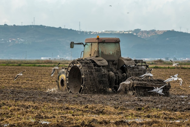 鳥の間で田を耕しトラクター