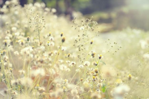 野生の花と自然の背景のヴィンテージ写真。