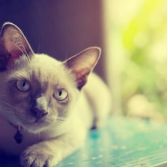 Симпатичный кот рассеянный возле окна - старинный цветовой эффект, мягкий фокус