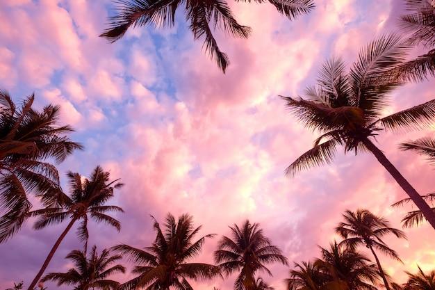 日没の夕暮れ時に熱帯のビーチのシルエット。夏のビーチと夕暮れ時のヤシの木の海の絵
