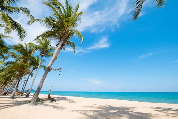 夏の熱帯のビーチでココヤシの木の風景。夏の背景のコンセプトです。
