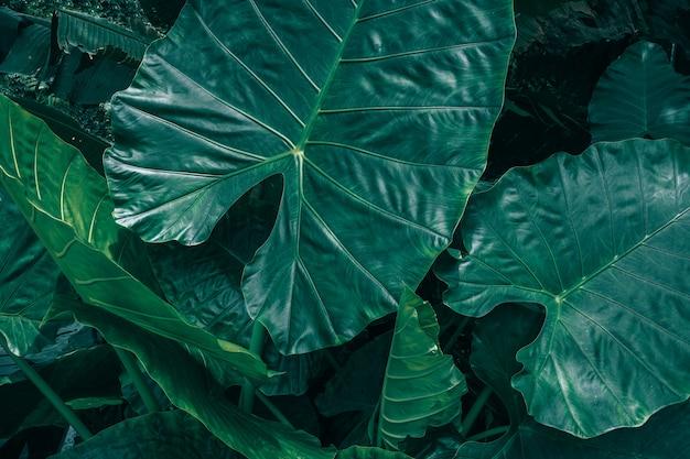 濃い緑色の質感を持つ熱帯の葉の大きな葉