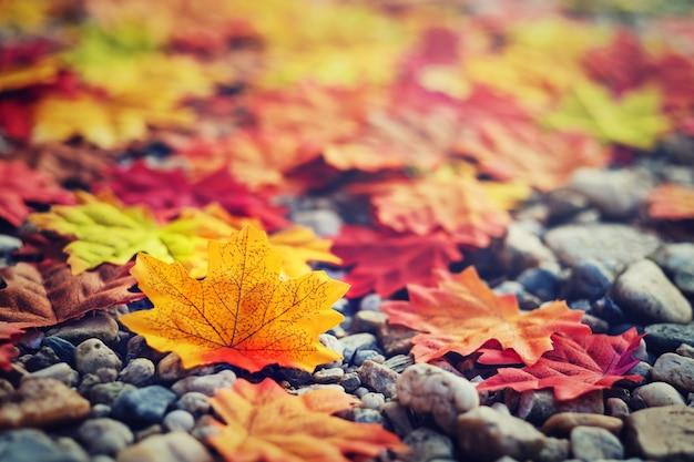 美しい秋の紅葉