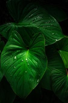 暗闇の中で熱帯の葉の大きな葉