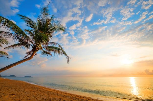 Морской пейзаж красивый тропический пляж с пальмами на рассвете