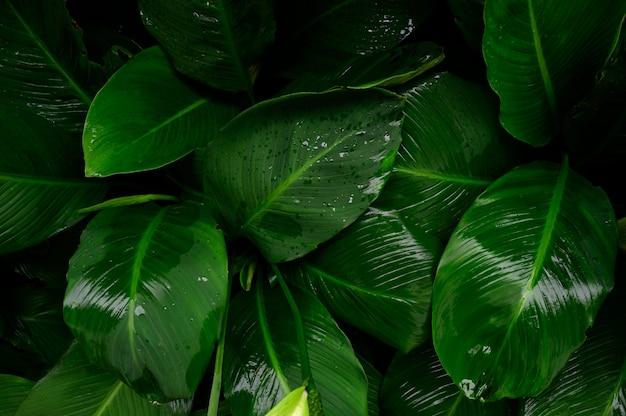 雨の水滴と濃い緑色のパターンの葉。熱帯の葉の上から見たショット。緑の環境概念の抽象的な性質の背景。