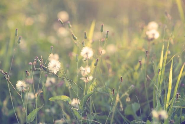 夕日に野生の花と植物と自然の背景のヴィンテージ写真