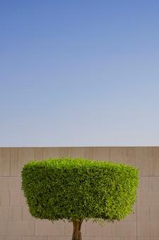 美しい緑の丸い木は、日の光の中で青い空の上の壁の背景に形を残します。