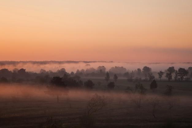 谷の日の出、地平線の上に昇る太陽、暖かい日差し、野原の霧、空撮、草原の松の木、オレンジ色の空