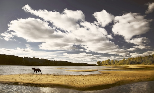 Летний солнечный пейзаж на реке, облака в голубом небе, черная собака бежит по пляжу, лабрадор на улице