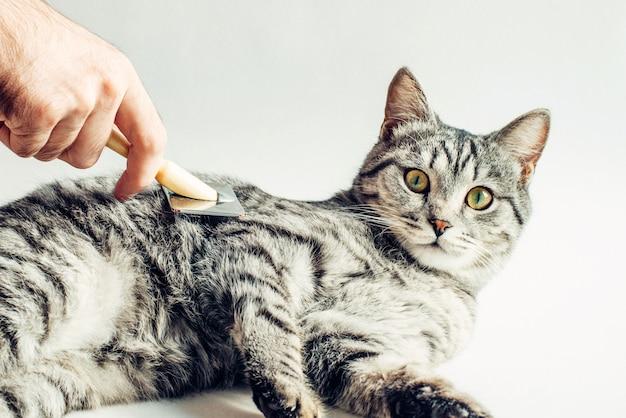 Расчесывание серого кота от лишних волос на белом