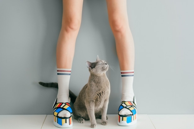 Русская голубая кошка смотря вверх на красивых женских ногах в красочных модных высоких кожаных сандалиях клина на белой таблице. женщины носят высокие подошвы летней стильной обуви.