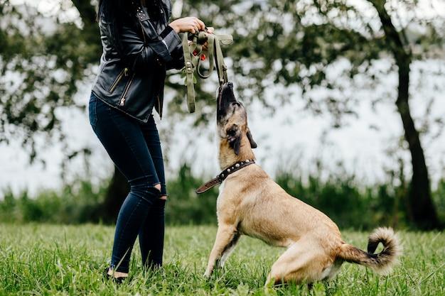 若いアクティブな女の子が遊んで、夏に屋外彼女の猛烈な陽気な高速うれしそうな犬を楽しんでいます。漫画の銃口の狂気の子犬と歩いているかわいい女性所有者。親切な女性は犬を気遣う