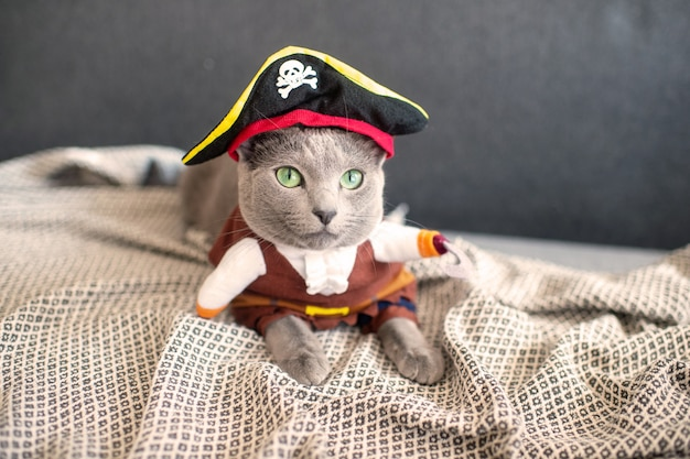 海賊衣装で素敵な子猫。ベッドの上に横たわるマスクで面白い猫