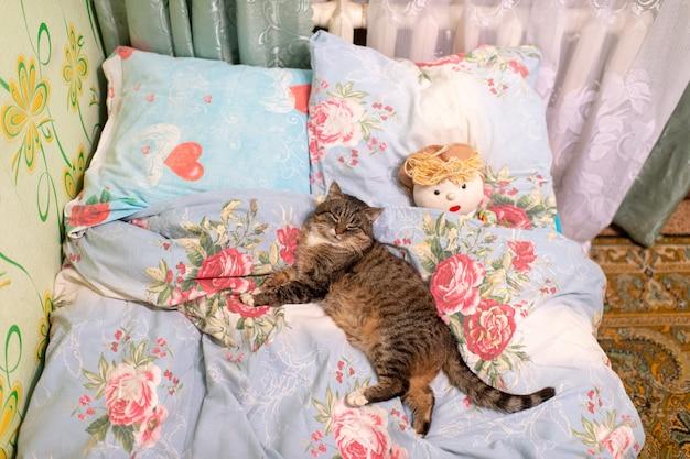 布人形でベッドで寝ている素敵な子猫