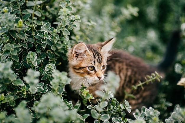夏の緑の草に素敵な子猫の肖像画。
