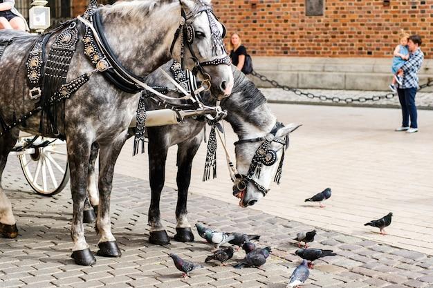 クラクフの観光客と一緒に馬車に乗るツアー