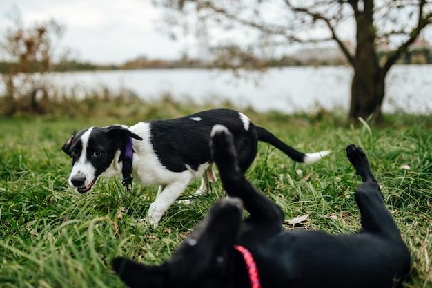 Маленькие счастливые щенки играют друг с другом на улице