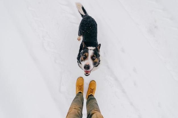 親切な人間の友人の上からの肖像-面白い笑顔銃口で勝者を見上げている忠実な犬。舌を見せ、食べ物を待っているかわいい素敵な子犬。冬の雪の上に立って幸せなペット。