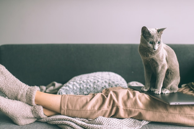 ベッドに横たわっている美しい子猫