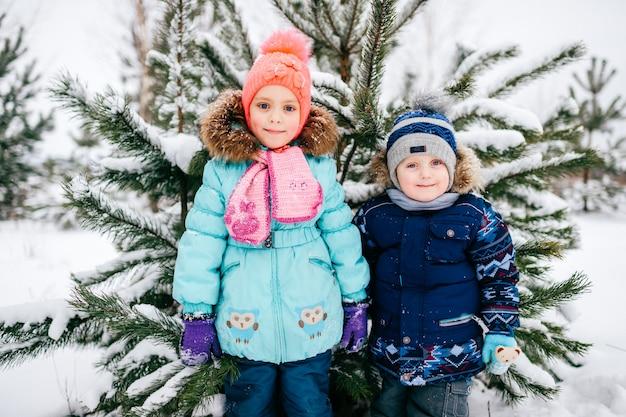 木の屋外の雪に覆われたクリスマスツリーの下に滞在面白い小さな子供たち。冬休みの子供たち。