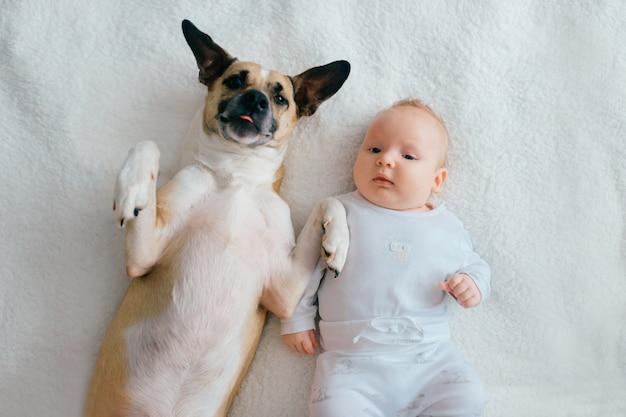 面白い子犬のベッドの上で横になっている生まれたばかりの赤ちゃんのトップの肖像画。