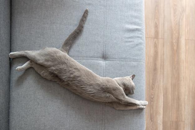 Прекрасный серый котенок спит на кровати