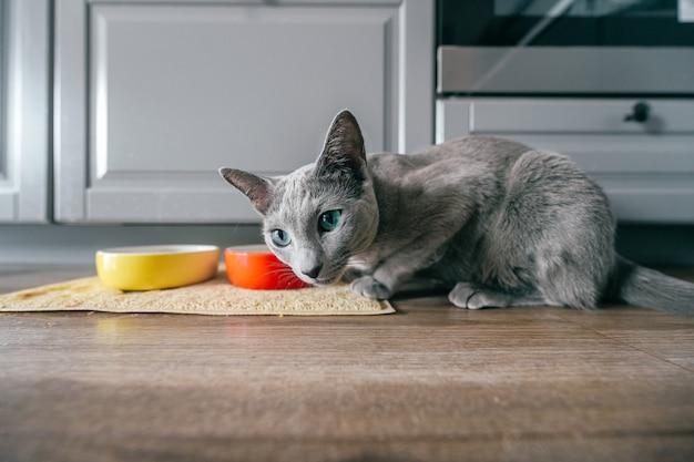 キッチンの床に座って面白い灰色の子猫