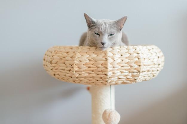 Прекрасный котенок лежал в соломенной кровати.